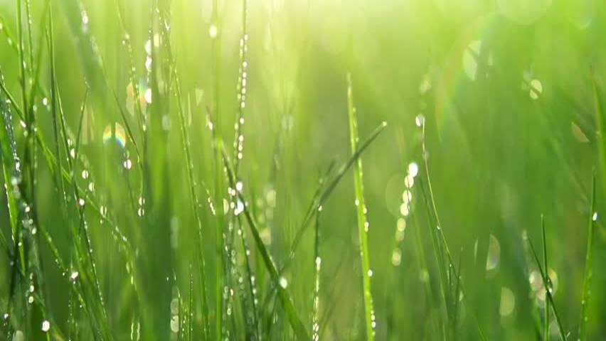 Grass_Background1